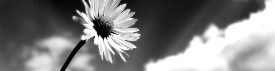 black-and-white-flowers-6